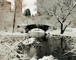 fun NYC winter events