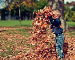 Little Boy Playing with a Pile of Leaves